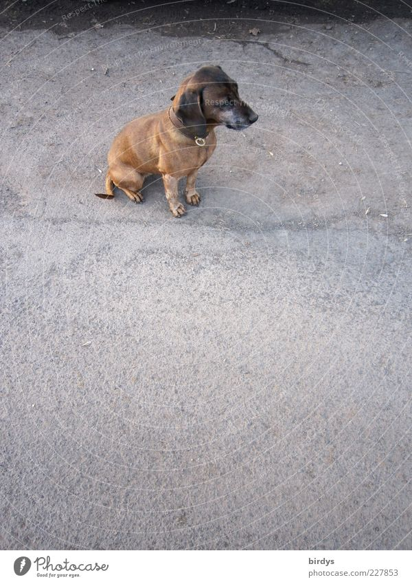 Beautiful Calm Loneliness Animal Street Sadness Dog Small Sit Wait Places Hope Cute Asphalt Longing Friendliness