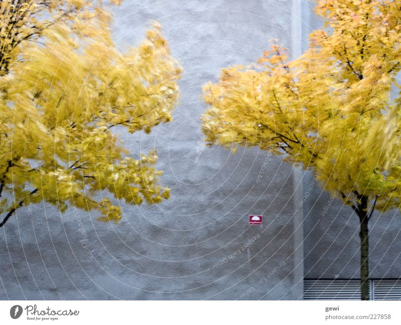 White Tree Leaf House (Residential Structure) Yellow Autumn Life Cold Wall (building) Environment Gray Movement Small Facade Wild Silver