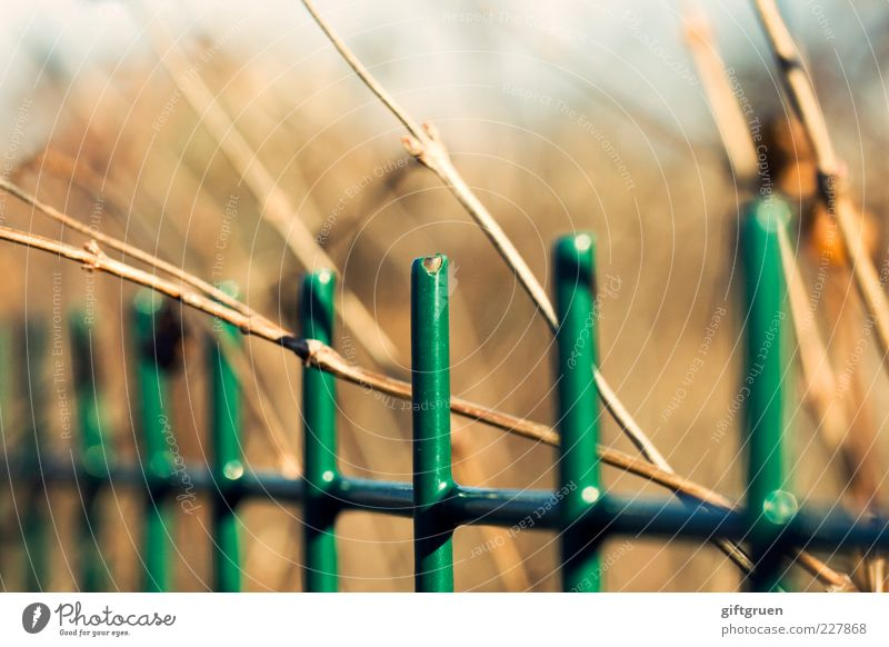 The paint is off Garden Bright Fence Garden fence Metalware Varnished Green Plant Winter Spring Simple Closed Captured Fenced in Freedom Longing Barrier Wedged