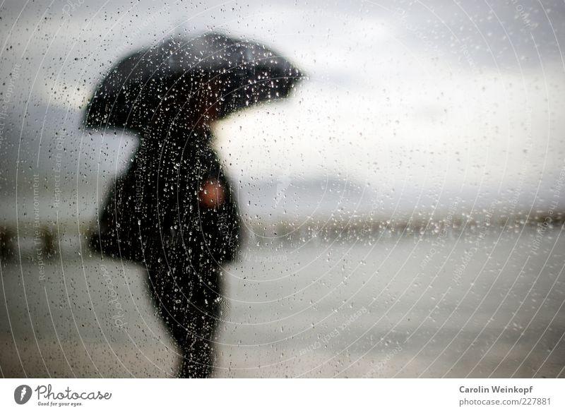 Water Lake Rain Air Coast Fog To go for a walk Umbrella Serene Footbridge Lakeside Window pane River bank Bad weather