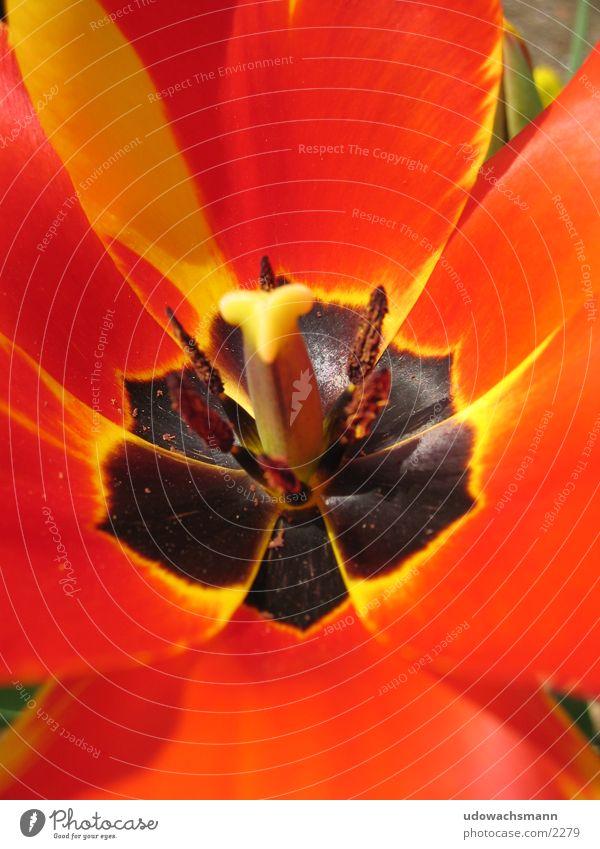 Flower Red Colour Blossom Pistil