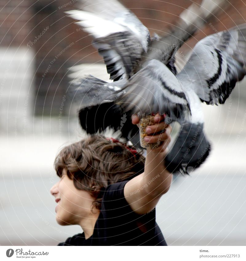 pigeon club meeting Joy Masculine Boy (child) Friendship Youth (Young adults) Head Arm 1 Human being 13 - 18 years Child T-shirt Bird Pigeon Wing Movement