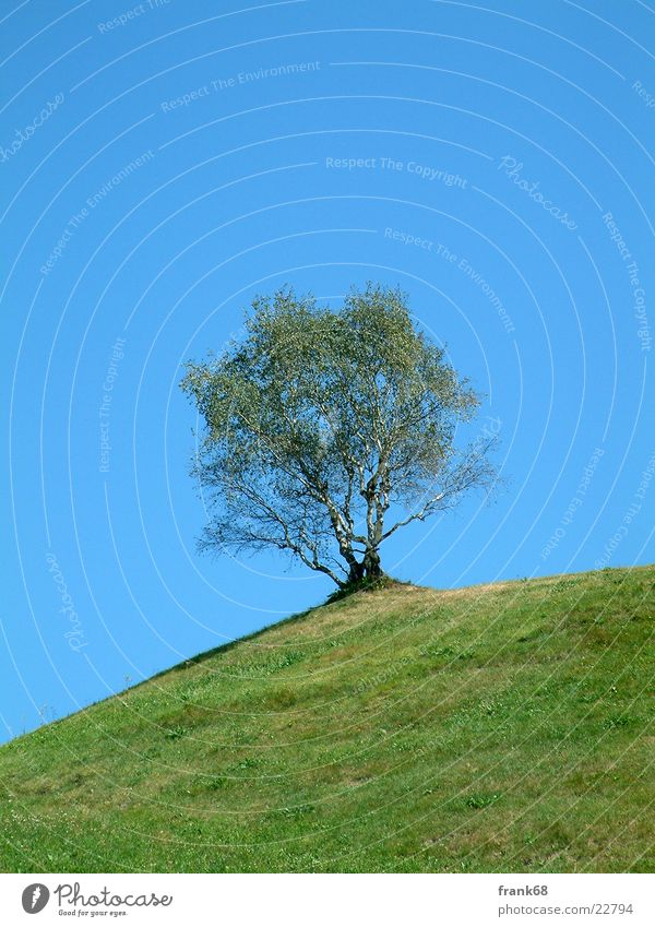 Tree Loneliness Meadow Mountain Spring