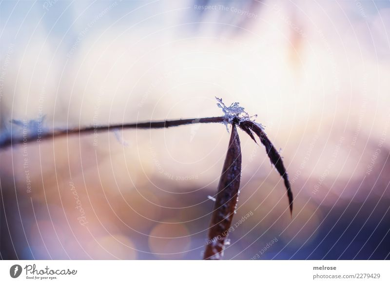 Crystal Sugar Nature Sunlight Winter Beautiful weather Ice Frost Snow Plant Grass Bushes Leaf Foliage plant Field Blur Point of light Visual spectacle
