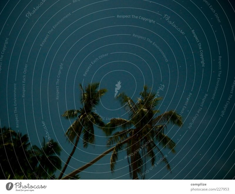 fullmoon Beautiful weather Plant Tree Blue Tropical Palm tree Palm frond Stars Starry sky Long exposure Colour photo Exterior shot Night Deserted