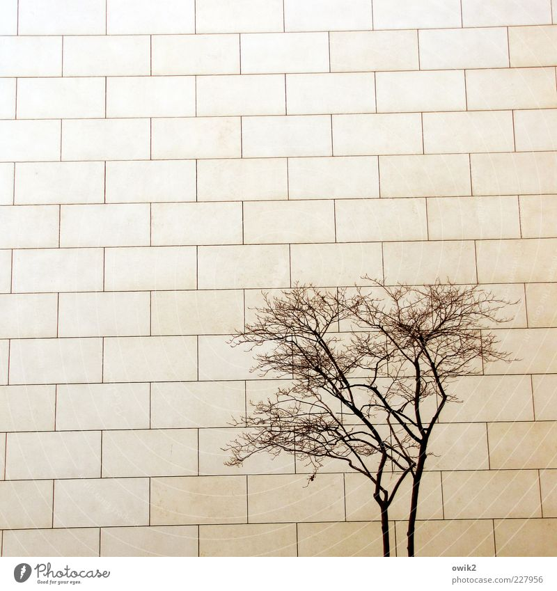 COMPETITION Plant Tree Twigs and branches Wood Manmade structures Building Architecture Wall (barrier) Wall (building) Facade Stone slab Stone wall