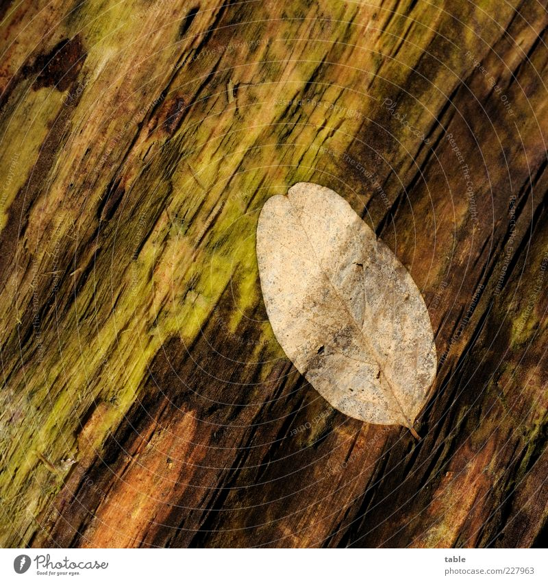 Nature Old Green Tree Plant Leaf Black Autumn Environment Wood Brown Lie Change Transience End Dry