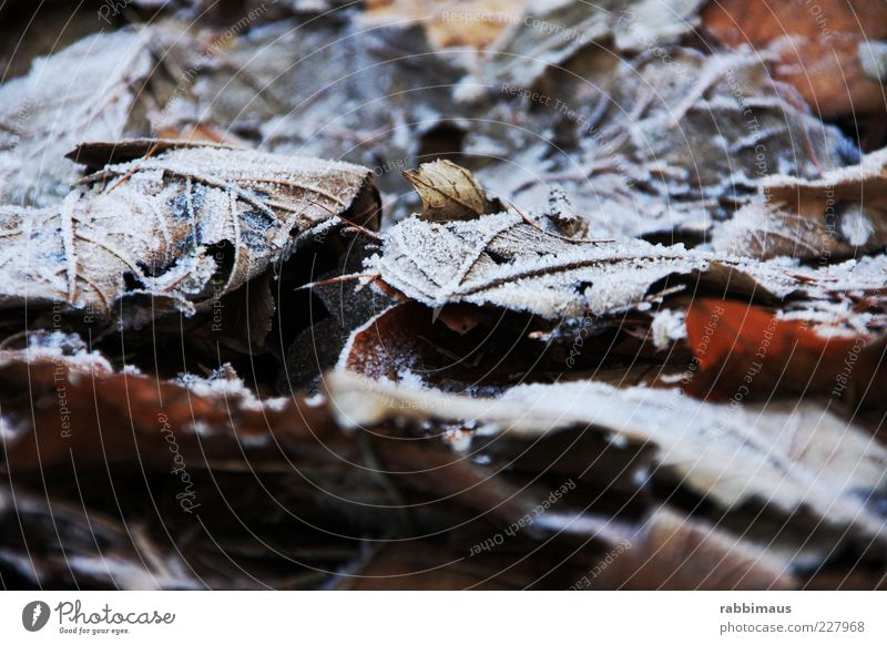 Nature White Leaf Black Cold Ice Weather Exceptional Frost Frozen Macro (Extreme close-up) Dank