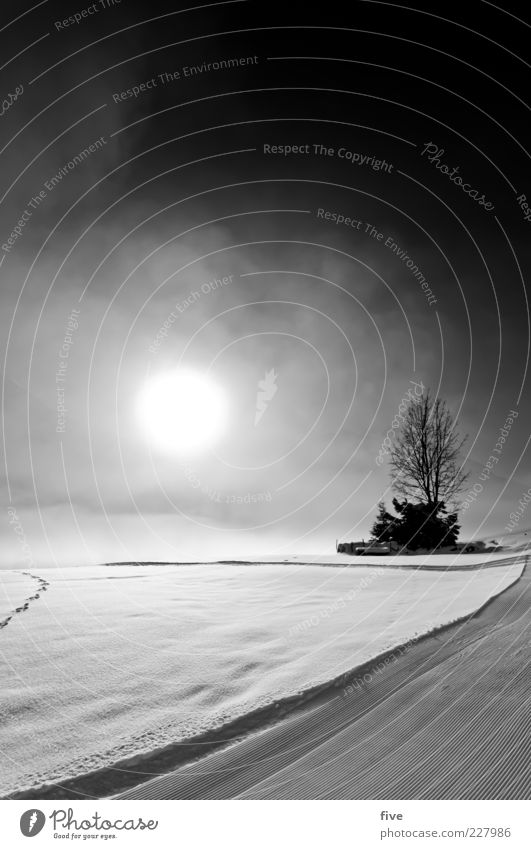 Sky Nature Tree Plant Sun Clouds Winter Cold Snow Mountain Lanes & trails Bright Ice Fog Bushes Frost