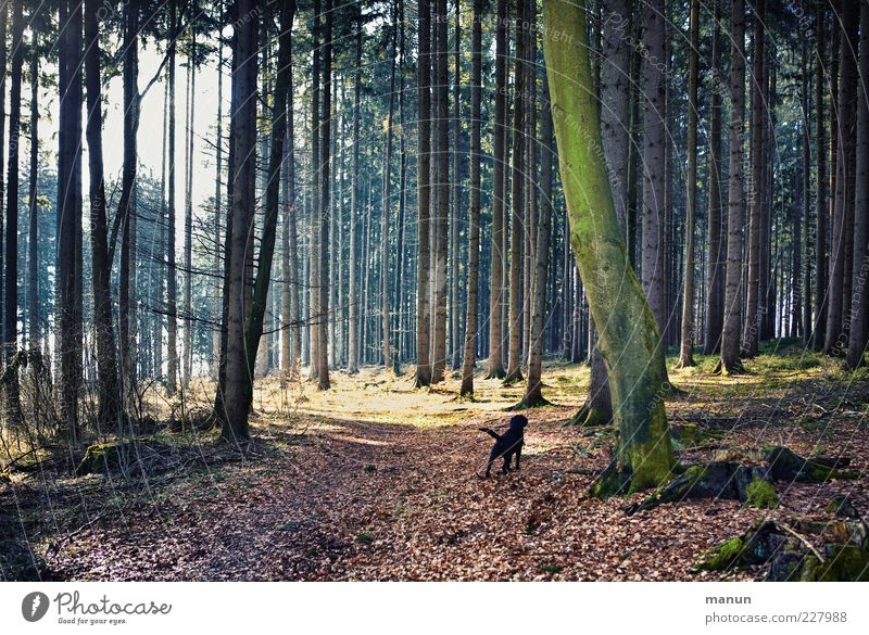 Nature Beautiful Tree Loneliness Black Forest Dark Landscape Lanes & trails Dog Trip Natural Authentic Individual Beautiful weather Pet