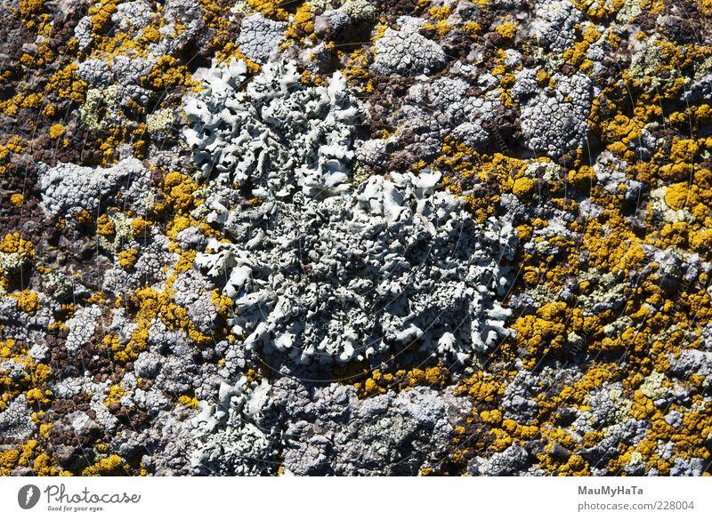 Lichen Nature Plant Colour Mountain Garden Park Rock Climate Elements Alps Virgin forest Chaos Exotic Senses