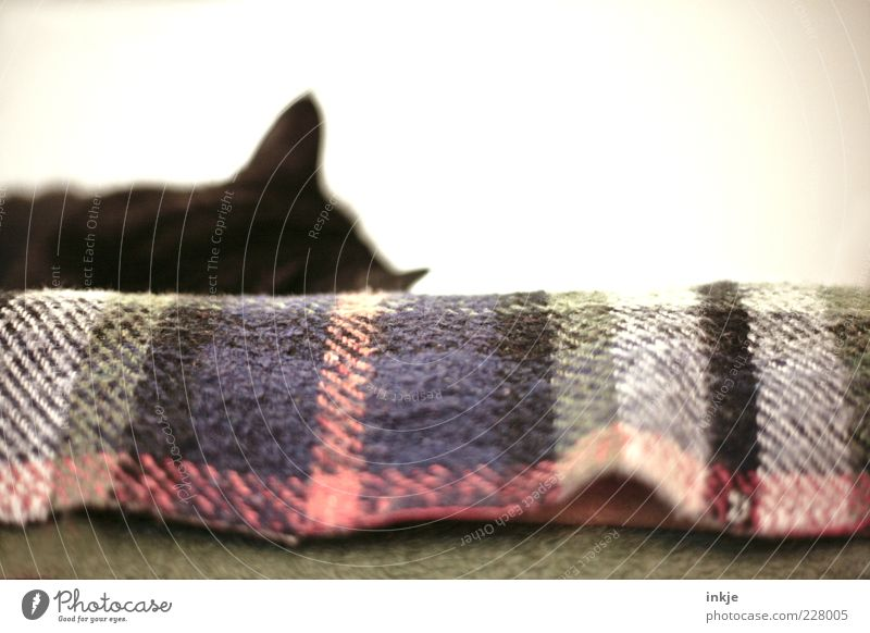 A cat in the house legalizes doing nothing! :-D Pet Cat 1 Animal Blanket Wool blanket Relaxation To enjoy Lie Sleep Cuddly Contentment Safety (feeling of)