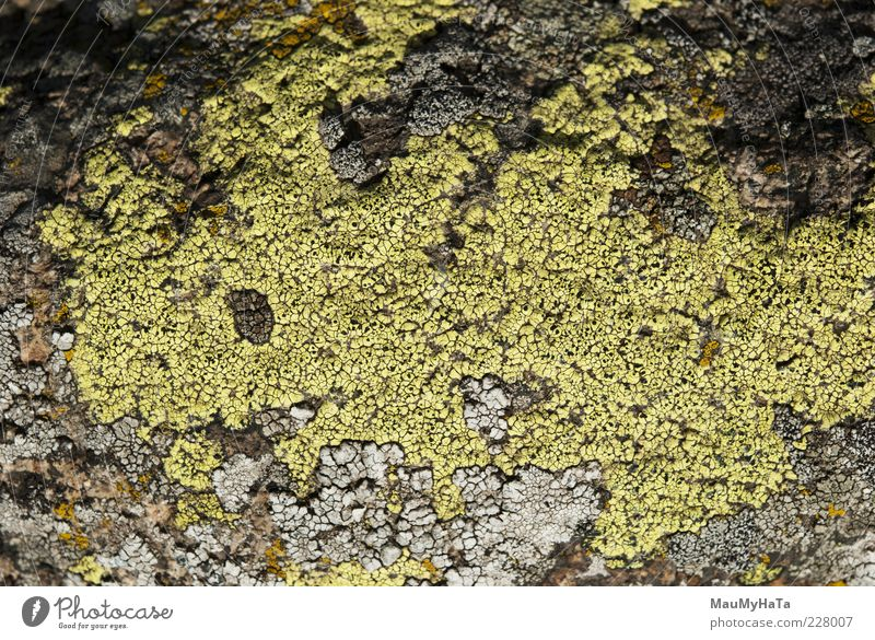 Lichen Nature Plant Mountain Life Garden Style Art Park Rock Climate Might Alps Virgin forest Chaos Exotic Puzzle