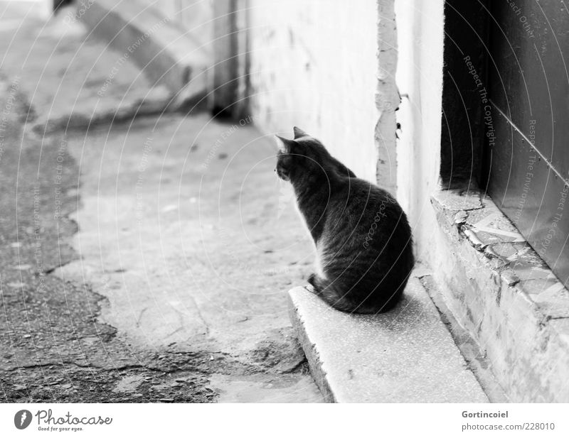 What's the point of the day? Stairs Door Animal Cat Pelt 1 Sit Wait Serene Calm Patient Prowl Street cat Black & white photo Exterior shot Copy Space left
