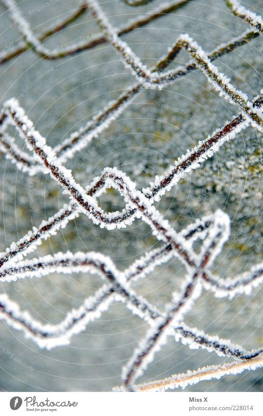 Winter Cold Snow Metal Ice Frost Fence Frozen Rust Wire Hoar frost Curved Barrier Black & white photo Garden fence Wire netting fence