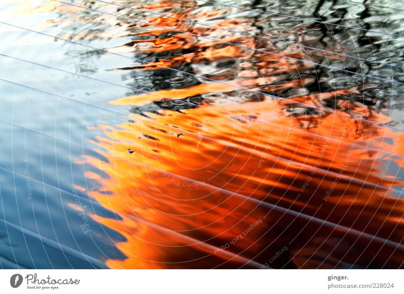 Sky Water Colour Environment Movement Weather Waves Glittering Beautiful weather Fire Force String Copy Space Pond Surface of water Sunrise