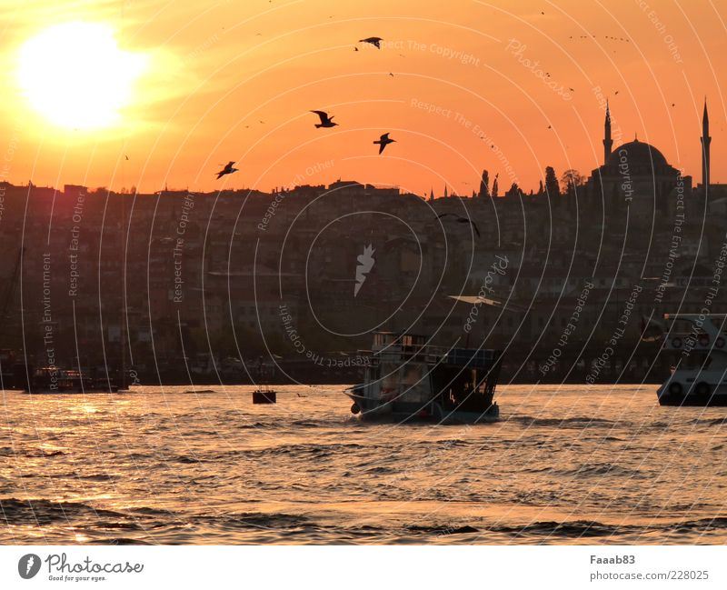 evening rush hour Tourism Ocean Istanbul Turkey Town Capital city Skyline Harbour Transport Navigation Boating trip Passenger ship Society Decadence Luxury
