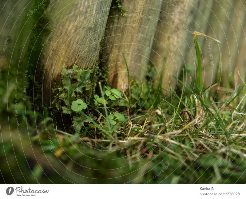 Plant meeting point wood palisade Earth Grass Moss Leaf Weed Grass green Meadow Wood Fragrance Growth Old Fresh Soft Brown Green Bravery Self-confident Grief