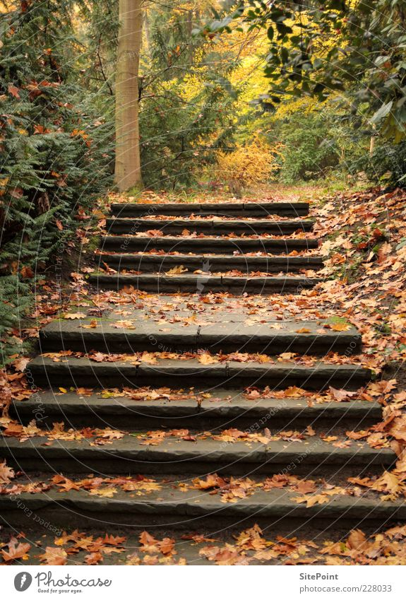 Nature Tree Plant Leaf Calm Forest Autumn Environment Landscape Stone Trip Stairs Tree trunk Autumn leaves Autumnal Wild plant