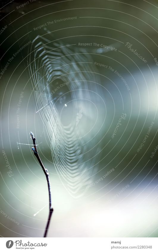 finely networked Harmonious Calm Nature Branch Dark Thin Authentic Success Creepy Cold Natural Purity Sadness Disappointment Loneliness Guilty Fear Spider's web