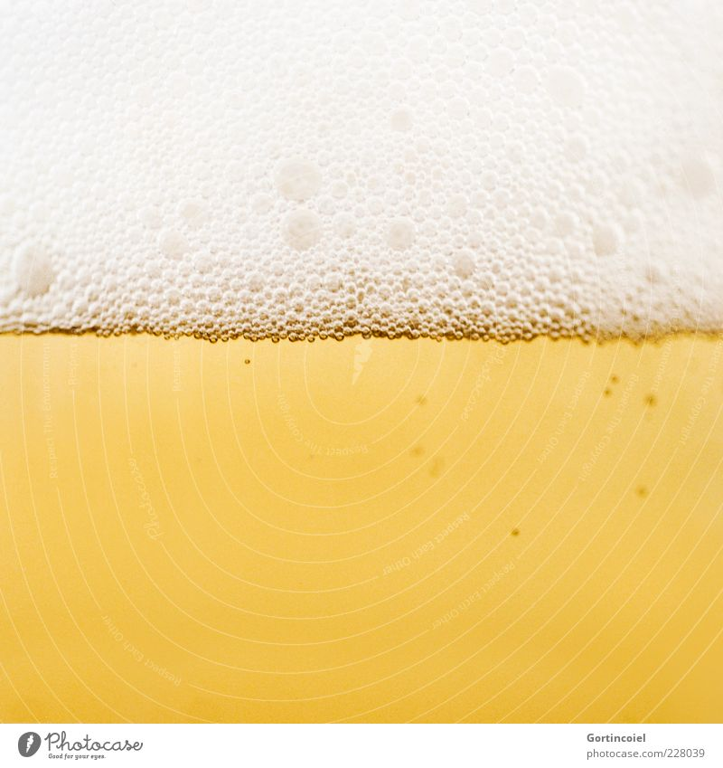 Cheers Food Beverage Alcoholic drinks Beer Delicious Yellow Gold Froth Alcoholism Colour photo Close-up Detail Macro (Extreme close-up) Copy Space bottom