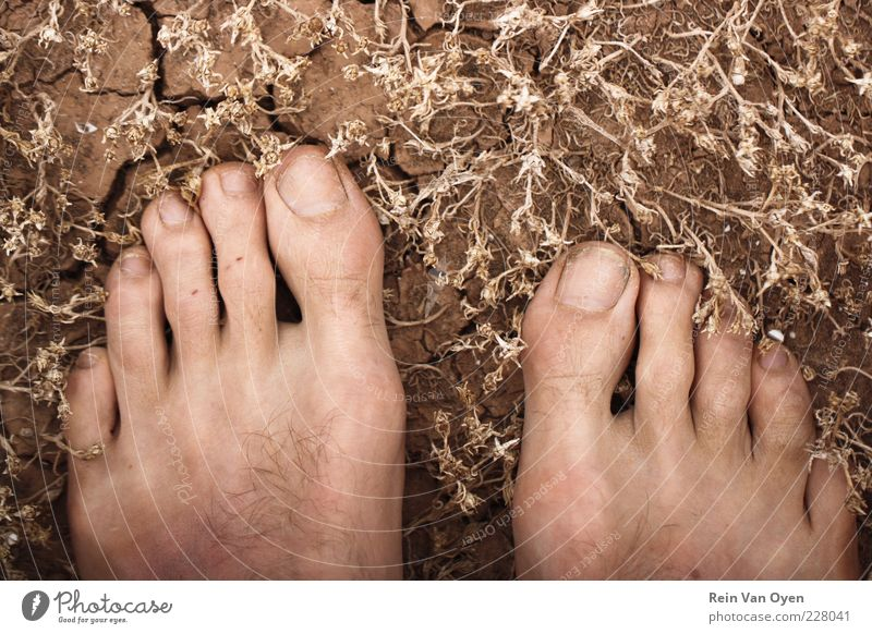 Freedom feet Vacation & Travel Trip Expedition Beach Hiking Human being Masculine Feet 1 Environment Nature Plant Earth Grass Moss Desert Stand Dirty Brown
