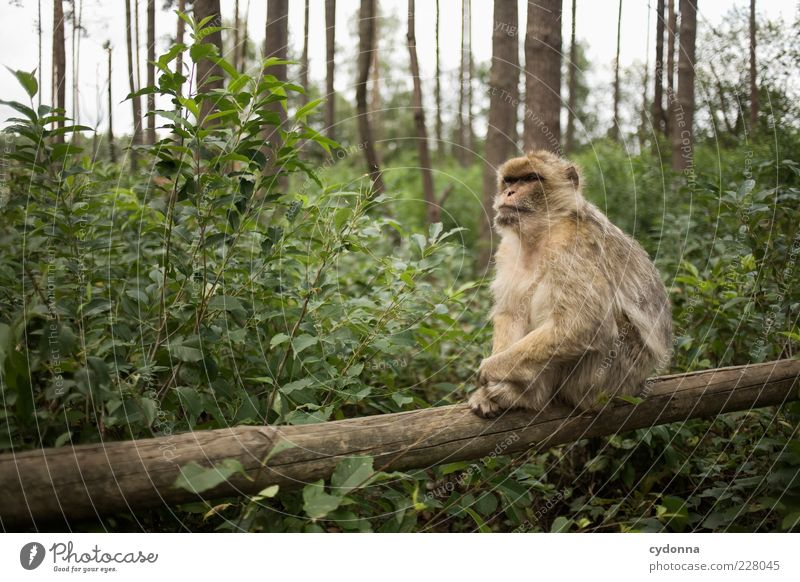 Nature Calm Animal Forest Environment Sit Uniqueness Pelt Zoo Monkeys Peaceful Wooden stake Free-living Crouching Hazard-free