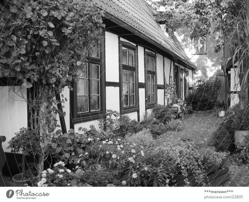 Fisherman's house in Warnemünde Health Spa Front garden Rostock Mecklenburg-Western Pomerania House (Residential Structure) Half-timbered facade Germany