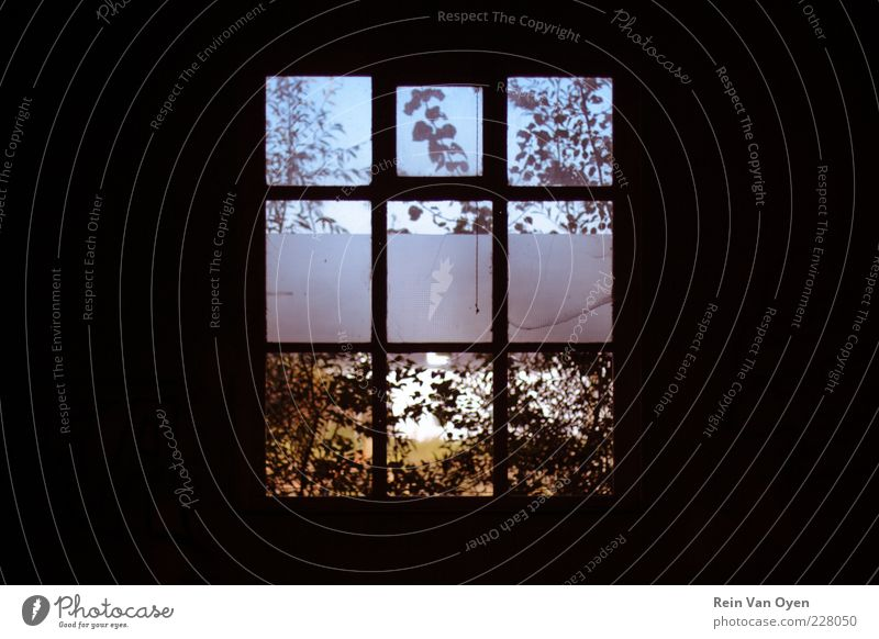 Mystery window Nature Blue Beautiful Plant Summer Winter Leaf Black House (Residential Structure) Yellow Environment Window Autumn Wall (building) Architecture Wall (barrier)
