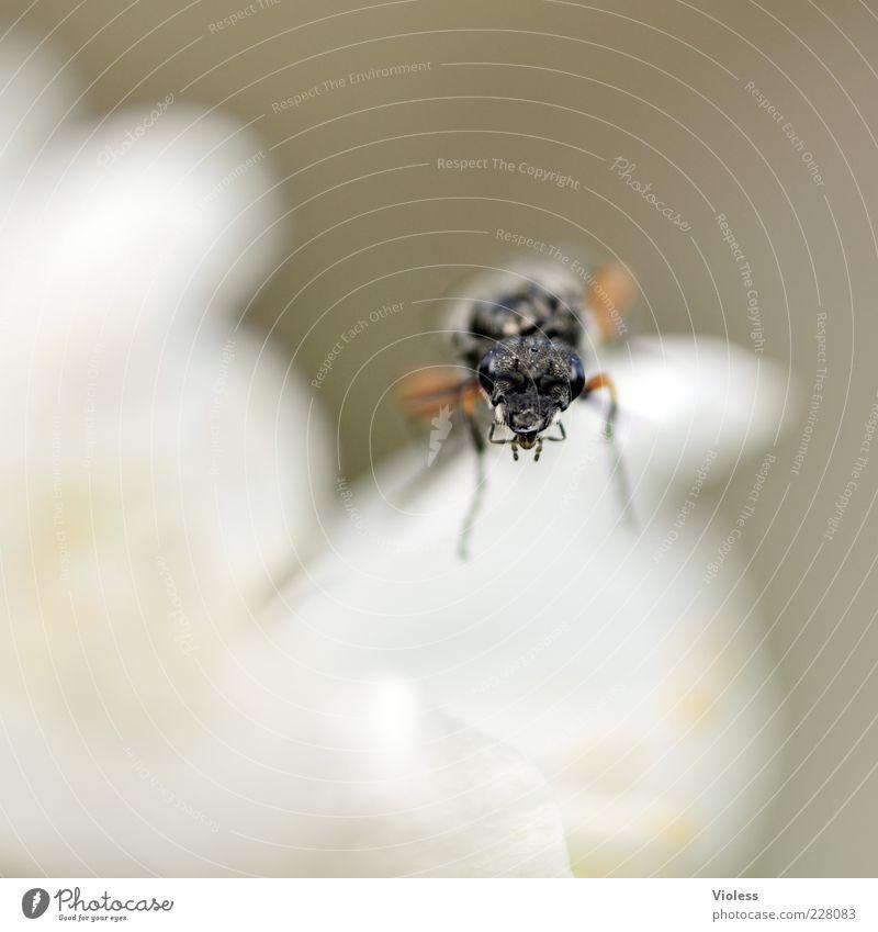 White Animal Black Curiosity Insect Brash Wasps Compound eye
