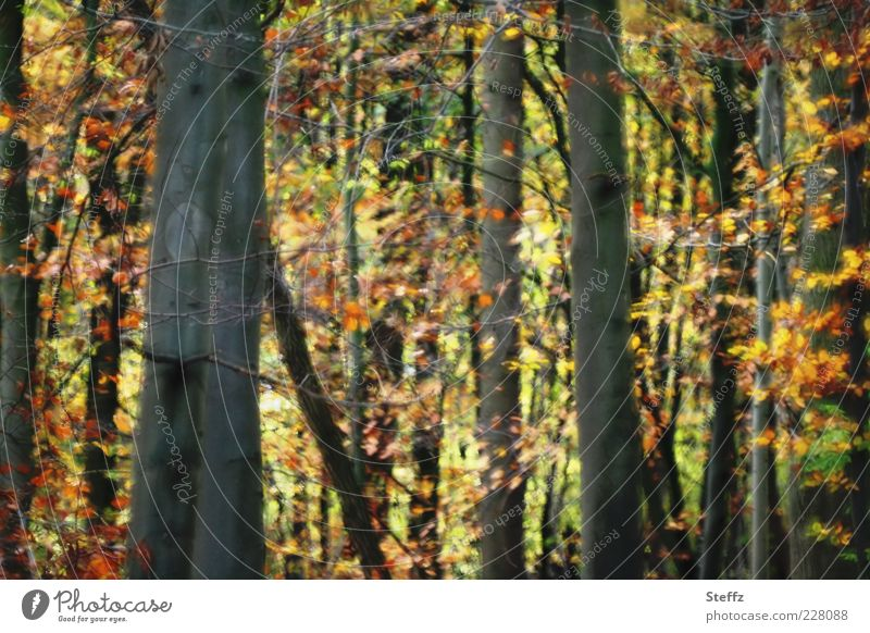 Autumn in the forest Automn wood Forest Forest atmosphere Sense of Autumn Autumnal colours Deciduous forest Autumn leaves autumn leaves warm colors