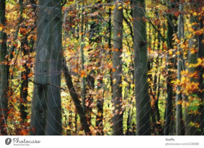 Nature Plant Colour Tree Leaf Forest Yellow Autumn Orange Romance Tree trunk Autumn leaves Autumnal Narrow Autumnal colours Automn wood