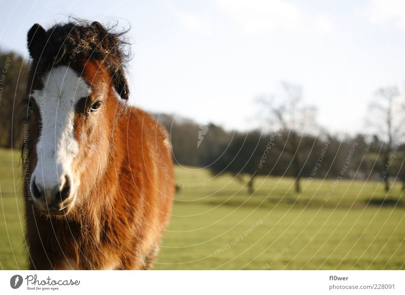 horse on a meadow!!! Nature Landscape Cloudless sky Sun Beautiful weather Grass Meadow Hill Animal Farm animal Wild animal Horse Animal face 1 Old Authentic