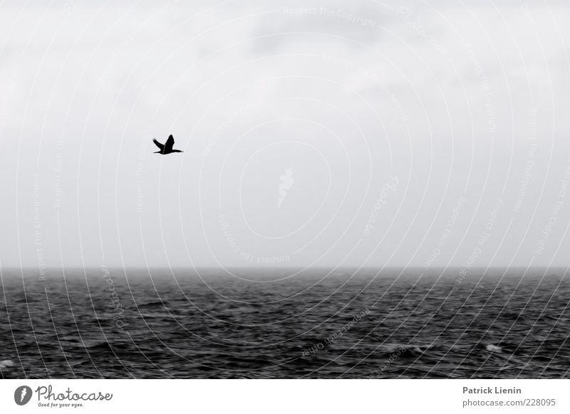Nature Water Ocean Animal Dark Autumn Environment Gray Rain Weather Waves Bird Wind Fog Flying Wild animal