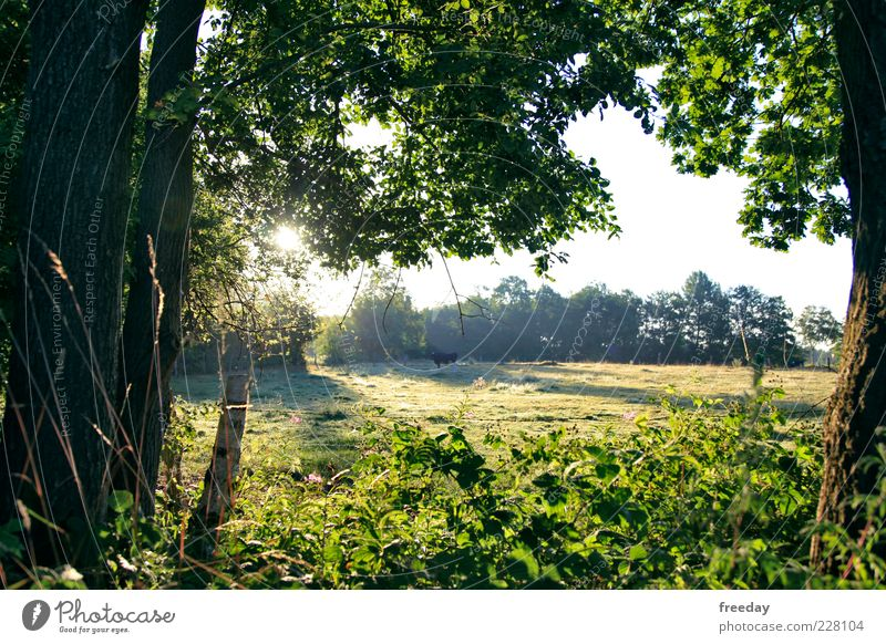 Nature Beautiful Tree Plant Summer Leaf Animal Forest Environment Landscape Meadow Grass Spring Bright Field Fog