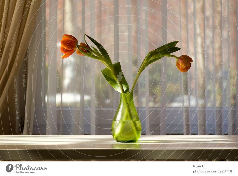 Green Flower Leaf Calm Car Window Table Lifestyle Illuminate Decoration Blossoming Stalk Joie de vivre (Vitality) Still Life Tulip Curtain Vase