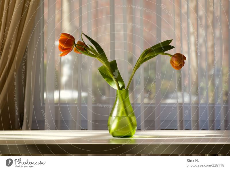 Green Flower Leaf Calm Car Window Table Lifestyle Illuminate Decoration Blossoming Stalk Joie de vivre (Vitality) Still Life Tulip Curtain Vase