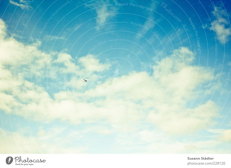 up Flying Clouds Clouds in the sky Summery Blue Colour photo Exterior shot Deserted Contrast Sunlight Wide angle Upward Sky only Cloud formation Blue sky