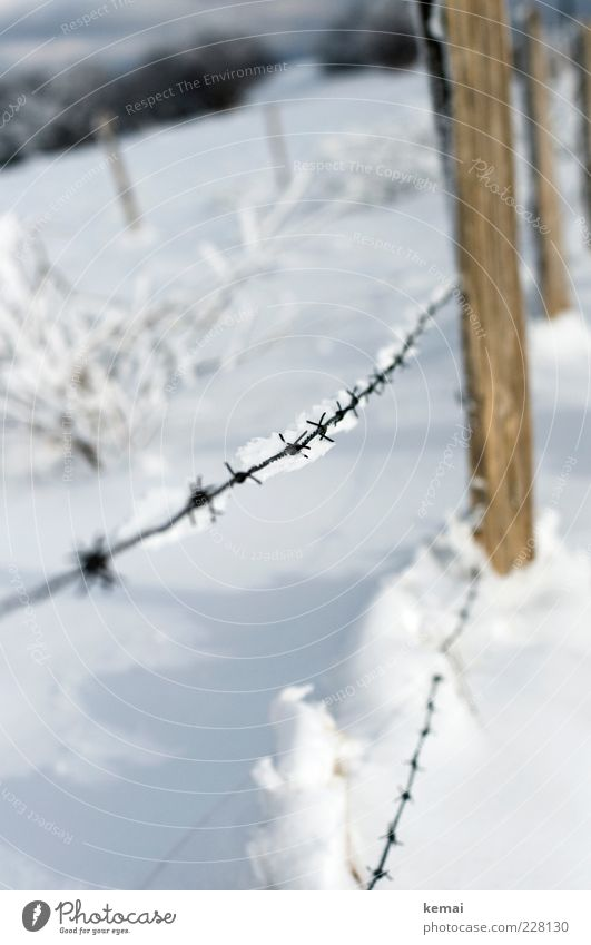 barbed wire Environment Nature Landscape Plant Sunlight Winter Beautiful weather Ice Frost Snow Bushes Fence Barbed wire Barbed wire fence Pole Bright Cold