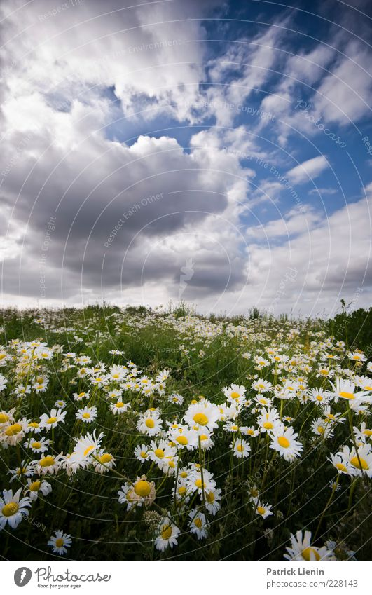 Am I dreaming? Environment Nature Landscape Plant Elements Air Sky Clouds Summer Climate Weather Beautiful weather Flower Wild plant Meadow Hill Fragrance