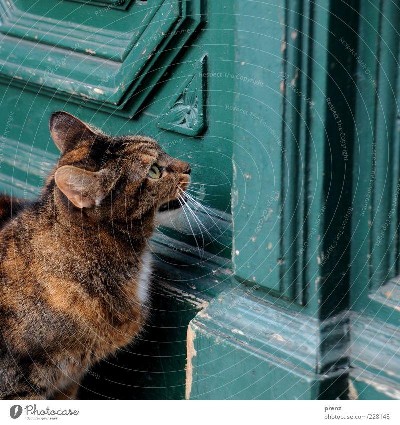 Old White Animal Eyes Cat Brown Door Wait Esthetic Ear Animal face Entrance Pet Patient Undo Meow
