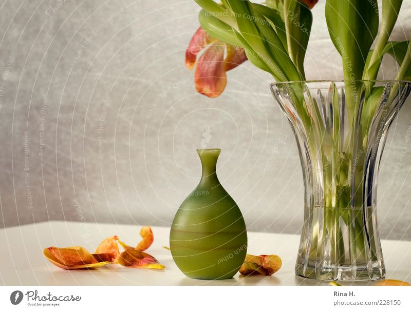 Still with tulips Lifestyle Flower Tulip Vase Faded Yellow Green Transience glass vase Blossom leave Interior shot Deserted Copy Space left Light