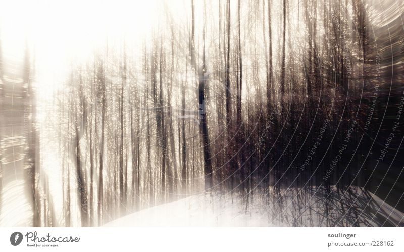 wildwood Nature Landscape Plant Air Sky Cloudless sky Winter Ice Frost Tree Forest Hill Wood Esthetic Brown Exterior shot Abstract Pattern Structures and shapes