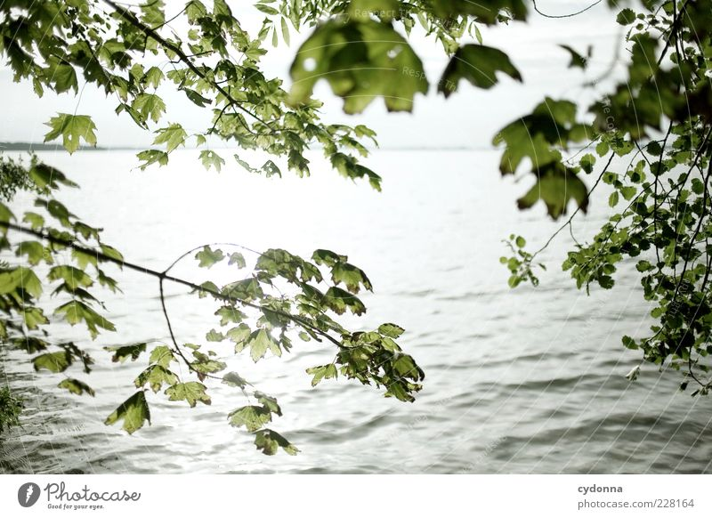 Nature Water Beautiful Vacation & Travel Summer Leaf Loneliness Environment Landscape Lake Waves Uniqueness Twig