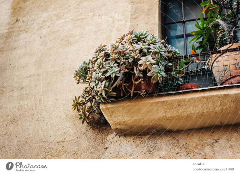 Plant House (Residential Structure) Window Travel photography Wall (building) Wall (barrier) Facade Living or residing Decoration Growth Italy Corner
