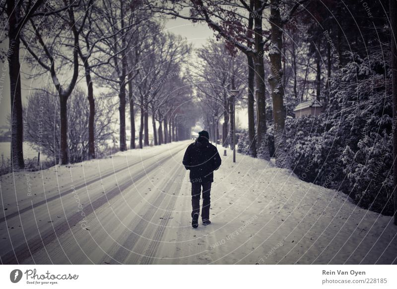 Walking in the snow Human being Man White Tree Black Loneliness Street Snow Adults Hiking Masculine Environment Walking Perspective Symmetry Alley