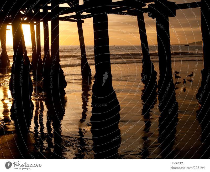 Sky Water Sun Ocean Beach Far-off places Freedom Sand Coast Waves Bird USA Footbridge Americas Seagull Jetty