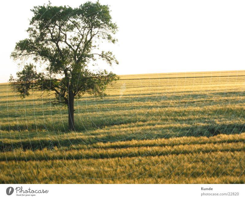 Tree on field Field Grain Sun