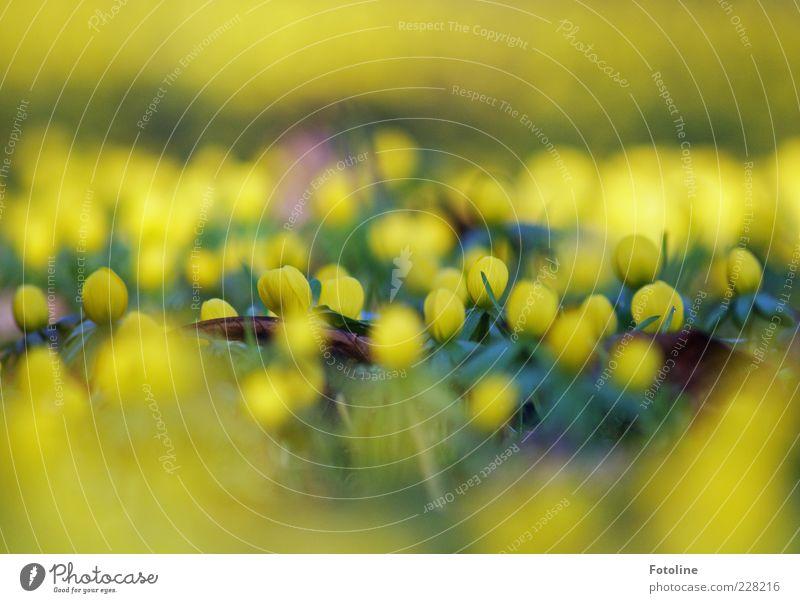 Nature Plant Flower Leaf Yellow Environment Grass Blossom Spring Bright Fresh Natural Illuminate Seasons Blur Wild plant