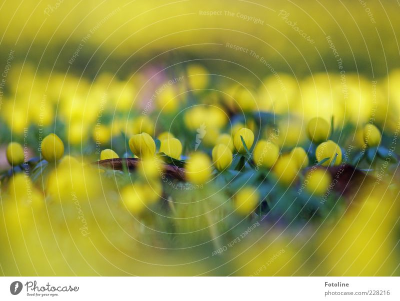 Nature Plant Flower Leaf Yellow Environment Grass Blossom Spring Bright Fresh Natural Illuminate Seasons Blur Wild plant